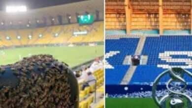 صورة خلية نحل في ملعب النصر والدويش يرد على سخرية الجماهير