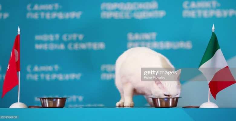 يورو 2020 : القط الروسي يختار طبق منتخب ايطاليا بدلاً من التركي - صور Getty